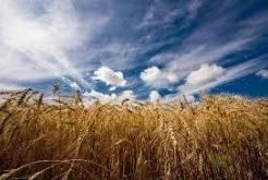 В России увеличился запас зерна на 3,3%