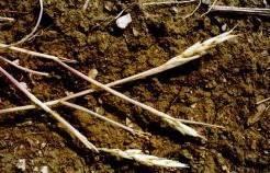 Жара во Владимирской области бьет рекорды. Урожай в опасности.