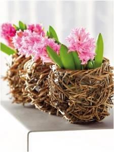 Луковичные цветы в интерьереЛуковичные цветы в интерьере