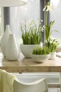 Луковичные цветы в интерьере
