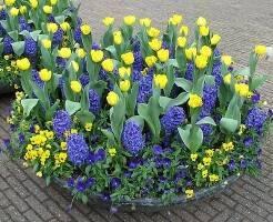 Луковичные растения — советы бывалых садоводов