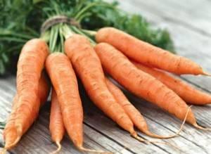 морковь первая культура для выращивания