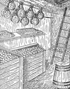 овощное хранилище