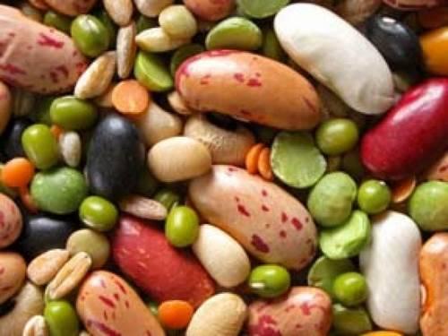 Виды бобовых культур фото