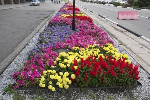 цветочная клумба фото в октябре