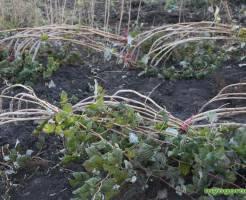Осенние работы в саду и на огороде