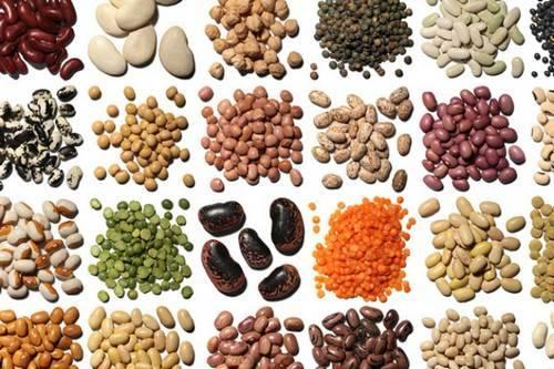 Галерея бобовых зерновых