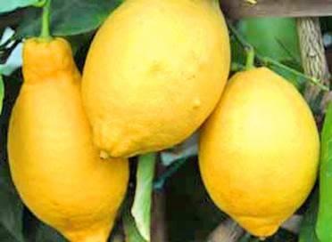 яичная скорлупа как удобрение для комнатных лимонов