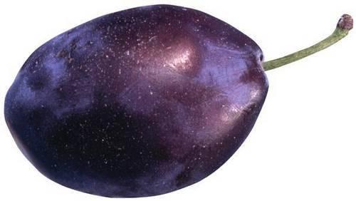 Плод сливы фото