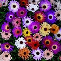 Цветы у венидиума