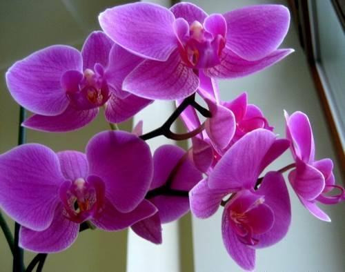 Орхидея зимой на окне