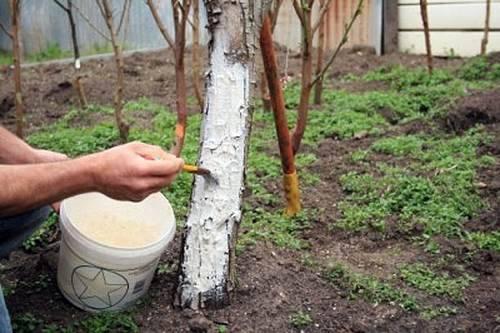 укрытие дерева от паразитов