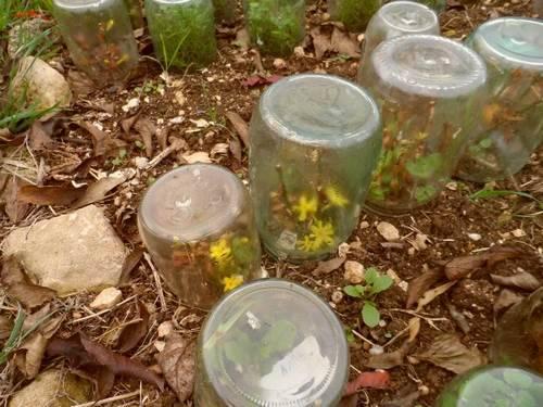 укрытие цветов от мороза