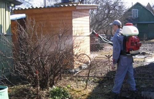 обезараживаем деревья и кустарники