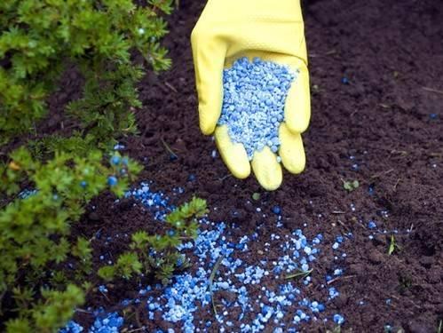Удобрять землю фосфатом и азотом лучше осенью перед вспашкой