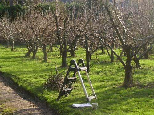 Подготовка к зиме яблони