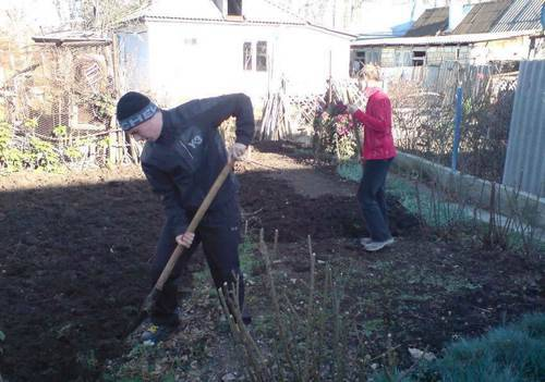 перекопать землю и наметить грядки
