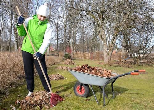 весенние работы в саду - обрезаем деревья и убираем листву