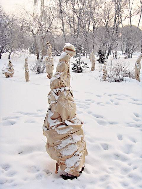 Защита кроны дерева от снега