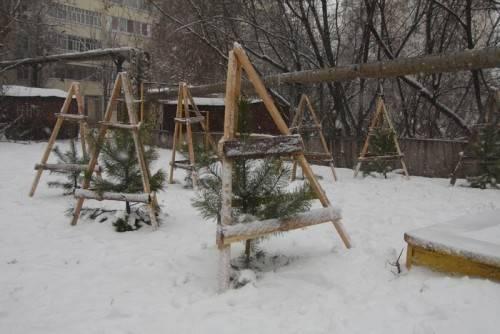 Уход за саженцами деревьев