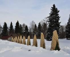 Уход за саженцами зимой