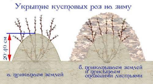 укрытие роз на зимы листьями