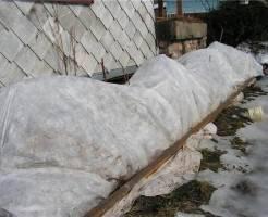 Защищаем многолетники от морозов