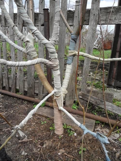 Защита веток и ствола дерева от грызунов