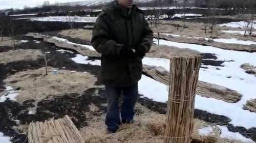 Защита саженцев деревьев