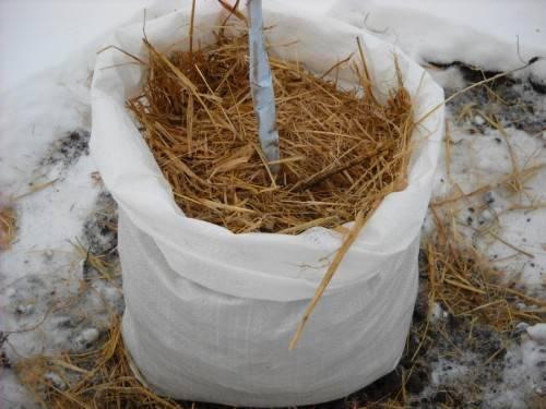 как утеплять деревья на зиму видео