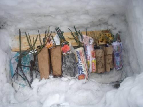 Зимовка саженцев кустарников