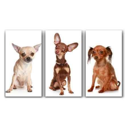 Купить Модульная картина Топпостерс, Собачки, 50x78 см, 3 части