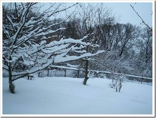 Готовим к зиме молодой сад