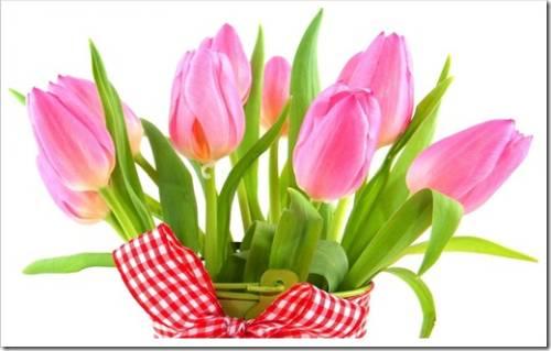 Почему высаживание тюльпанов весной может быть успешным?