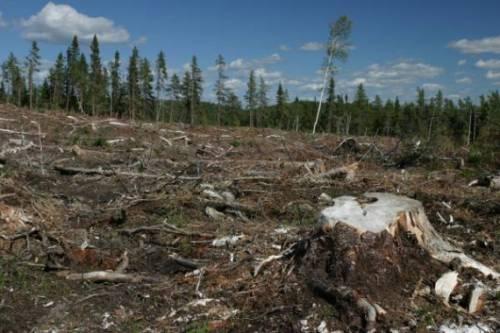 Последствия неконтролируемой вырубки лесов