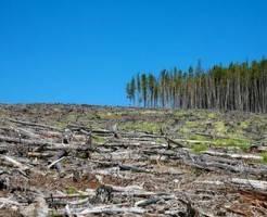 К чему приводит вырубка деревьев