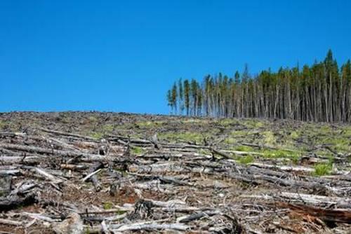К чему приводит вырубка лесов