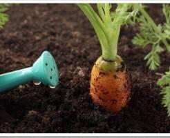 Что такое плодородный грунт?