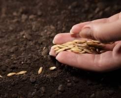 Как правильно посадить семена