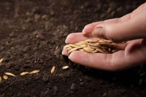 Как садить семена