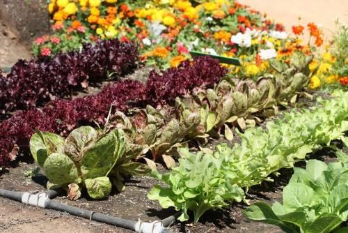 Овощи и цветы