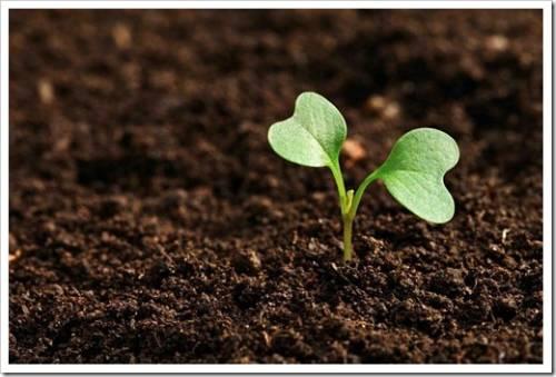 Какие преимущества предоставляет плодородный грунт?