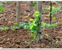 Что такое дезинвазия почвы?