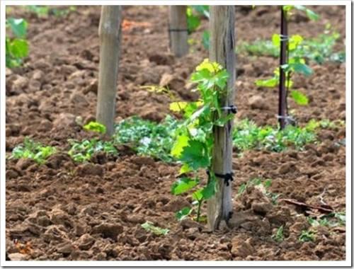 Существующие методы по дезинвазии почвы