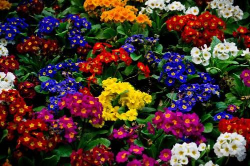 Виды садовых растений