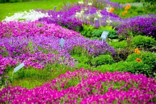 Виды и фото садовых цветов