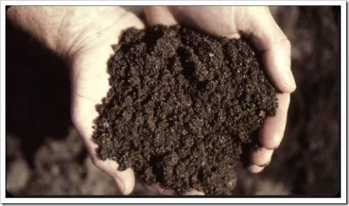 Различные добавки в почвогрунте