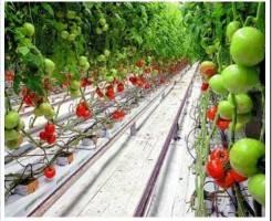 Современные способы прогрессивного растениеводства