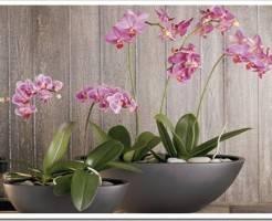 Как ухаживать за домашней орхидеей?
