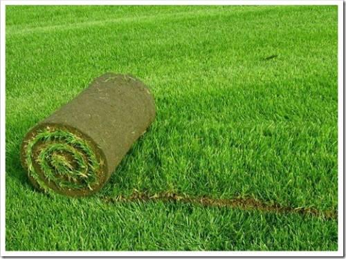 Готовим поверхность для засевания газона